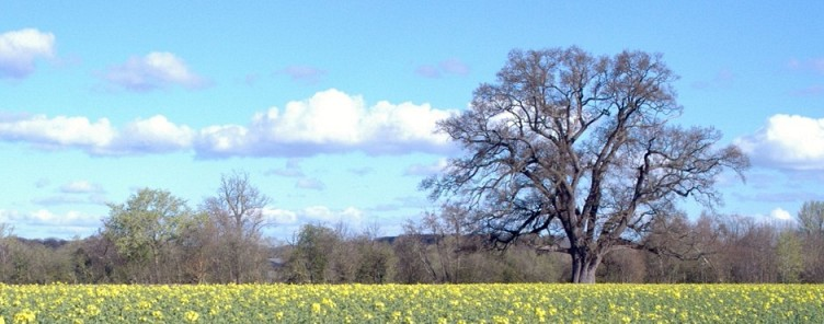 Eardislandoak_spring